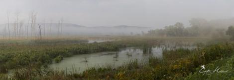 Eerie Wetlands