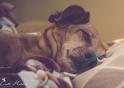 Sleepy Tindra