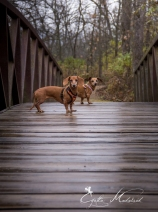 Dachshund Hiking path