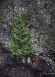 cascade state park-8881