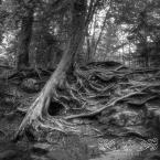 cascade state park-8886-