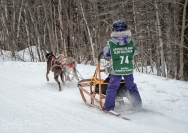 Apostle Islands Dog Sled Races 2015-7588-2