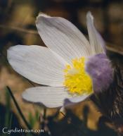 River Terrace wildflower walk-0182-Edit