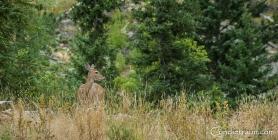 Black Hills SD-3774