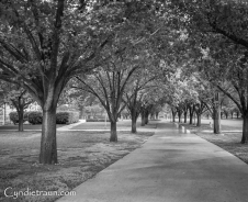 Southwestern University, TX-7954