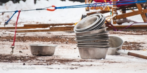 Apostle Island Sled Dog Races 2016-2229