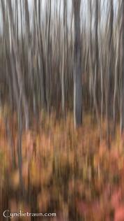 north-shore_fall-abstract-3277