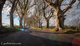 Dark Hedges-2597