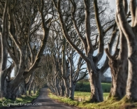 Dark Hedges-2608