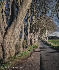 Dark Hedges-2634