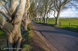 Dark Hedges-2646