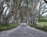 Dark Hedges -2715