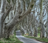 Dark Hedges -2716