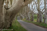 Dark Hedges -2719