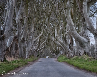 Dark Hedges-2723