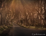 Dark Hedges 701