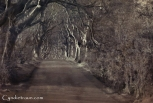 Dark Hedges-9508