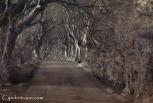 Dark Hedges-9508