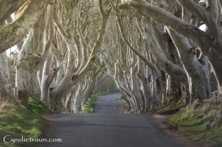 Dark Hedges-9513