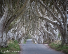 Dark Hedges-9586