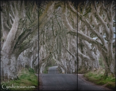 Dark Hedges-9588