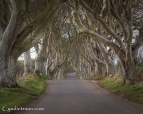 Dark Hedges-9613