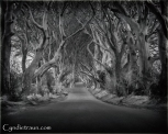 Dark Hedges _2702
