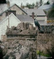 County Sligo-4800
