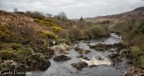 River Glen-9746