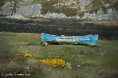 Irish Countryside-3750