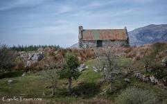 Irish Countryside-3773