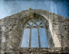 Ross Errilly Friary-3364