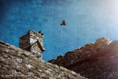 Ross Errilly Friary-3400
