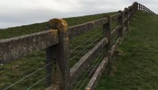 Cliffs of Moher Fence
