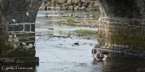 Doonbeg River-3866