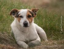 Kilkee Cliff Pup-9634