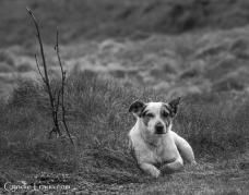 Kilkee Cliff Pup-9636