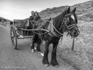 Gap of Dunloe-horse-2654-Edit