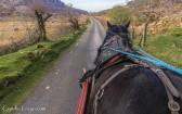 Gap of Dunloe-horse-2656