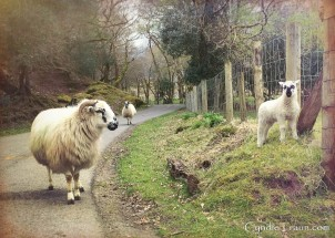 Killarney National Park-2705