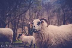 Killarney National Park-4254