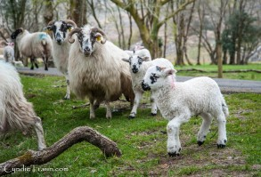 Killarney National Park-4255