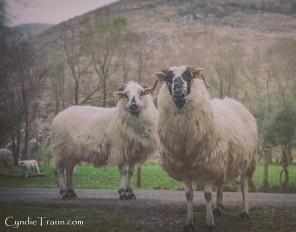 Killarney National Park-4256