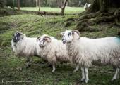 Killarney National Park-4257