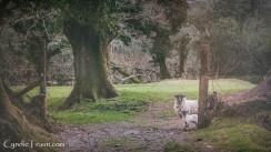Killarney National Park-4265