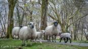 Killarney National Park-4267
