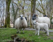 Killarney National Park-4269