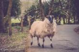 Killarney National Park-4282