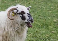 Killarney National Park--9829