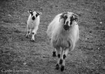 Killarney National Park--9833
